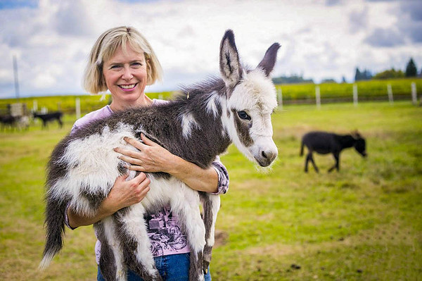 JF Miniature Donkeys in Skagit Valley, WA