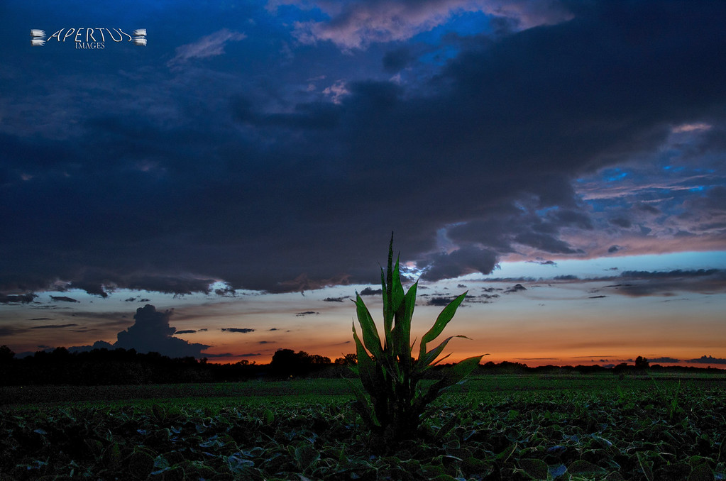 """Jersey County Sunset"" (Captured near Kane, IL, 2014)"