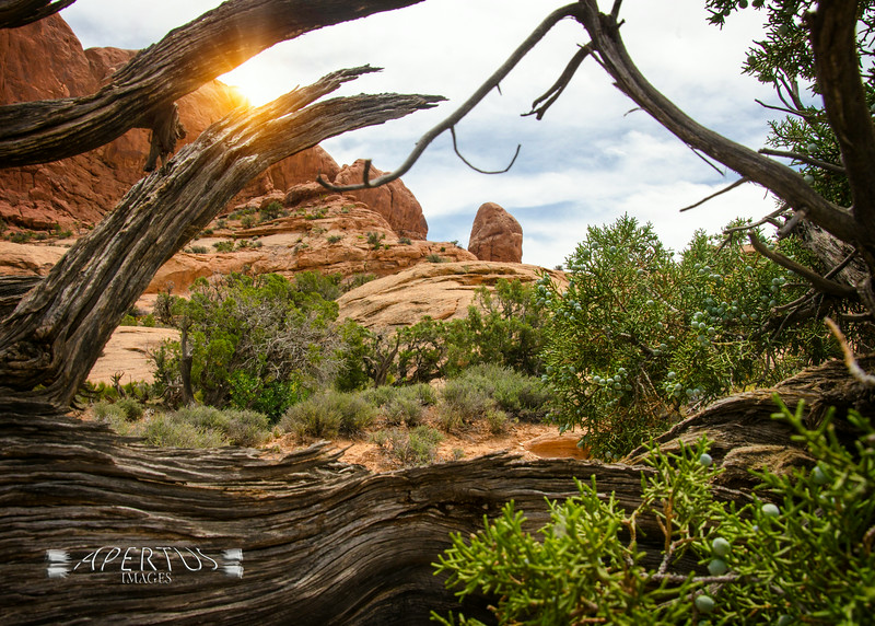Taken in Utah at Arches National Park  (2014)