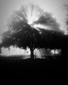 Billie Jo got this shot of a neighbor's tree. !st place in Black & White