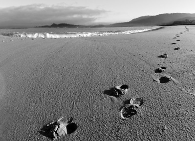 Footprints at beach during foggy dawn