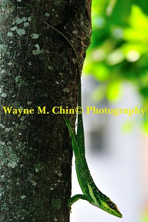 WMC_3597