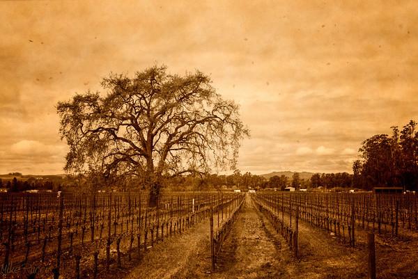 Roberts Road Vineyard