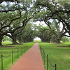 Oak Alley Plantation<br /> 47 Live Oaks from the house to the river.