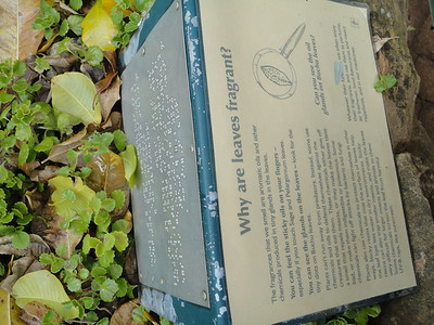 Kirstenbosch National Botanic Garden--braille on the flip side?
