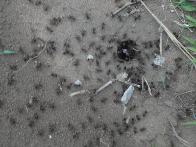 visit to the Emdoneni Cat Rehab Project--Ants!