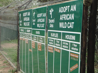 visit to the Emdoneni Cat Rehab Project