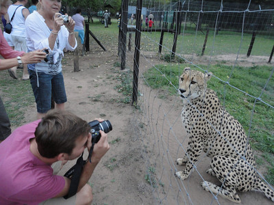 visit to the Emdoneni Cat Rehab Project--Chita the Cheetah