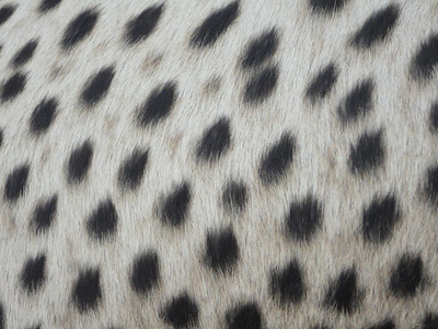 visit to the Emdoneni Cat Rehab Project--cheetah spots