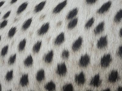 visit to the Emdoneni Cat Rehab Project--cheetah spots