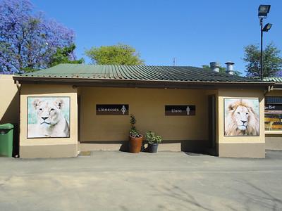"""Visit to """"Lion Park""""--me LION!"""