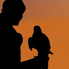 silhouette of a woman falconer holding a falcon on the glove against a sunset background