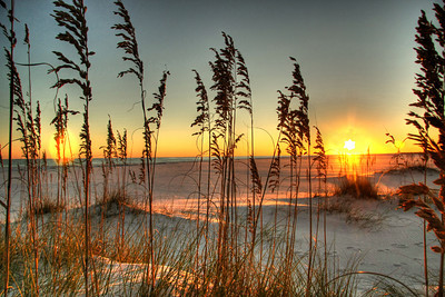 HDR, Sea Oats in the light
