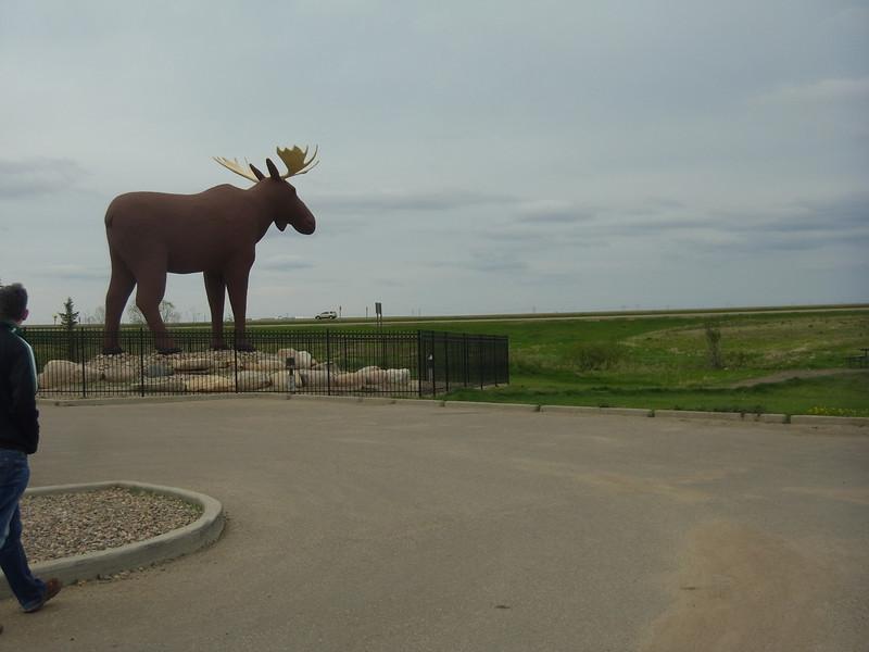 Mac the Moose looks to the prairie.
