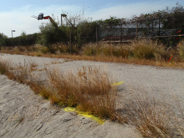 """Found 4"""" Brass Cap Los Angeles County Flood Control District R/W monument stamped """"RW BC"""" at east end of curve of south line of Riverwalk Easement having a radius of 4000 ft."""