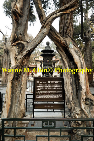 WMC_0398_Copy