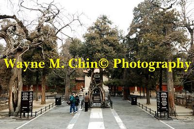 WMC_0396_Copy