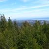Santa Cruz, seen from the 95 ft level