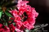 Tea Flower<br /> by Jack Foster Mancilla - LensLord™