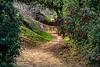Tecolote Trail