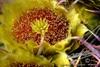 "Single Barrel Cactus Flower  <a href=""http://lenslord.com/2010/05/04/single-barrel-cactus-flower/"">Link to the article on my blog</a>"