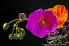 ThreeFlowers<br /> by Jack Foster Mancilla - LensLord™