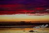 Ocean Beach Pier<br /> by Jack Foster Mancilla - LensLord™<br /> _MG_3888