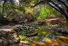 Tecolote Creek