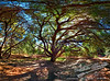 The Gathering Tree by Jack Foster Mancilla - LensLord™