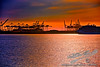 Cranes at Sunset<br /> by Jack Foster Mancilla - LensLord™<br /> _MG_9461