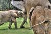 I Love You Mom - San Diego Wild Animal Park