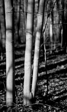 Walk in the Woods-1017283