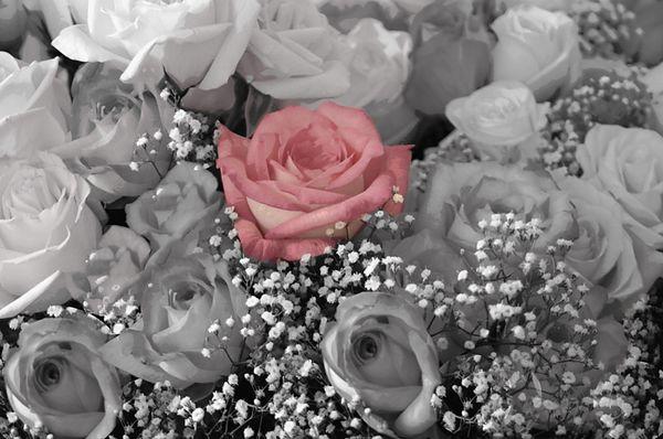 A Rose Among Us