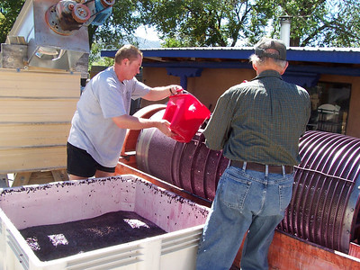 Ronald and winery chemist, Dick, scoop grapes into the press.