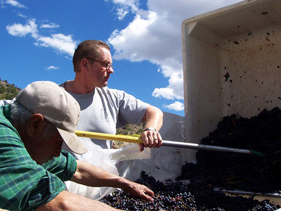 Ronald rakes grapes out of a bin.