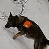 Avalanche search and rescue yearly rehersal in Gräftåvallen, Jämtland, Sweden.