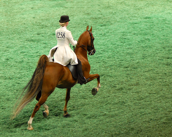 World's Championship Horse Show