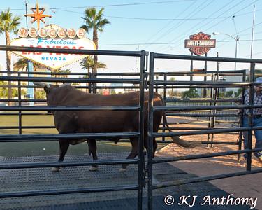 Bushwacker at the Las Vegas Sign on October 25, 2014.