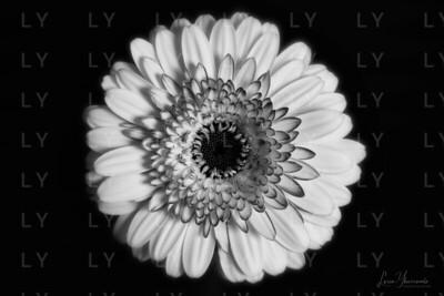 A photograph of a flower