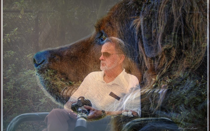 Bob and Bear overlay