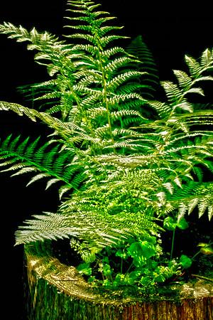 Grandma's Ferns