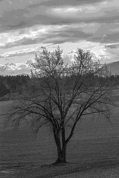 Solitude Tree - BW