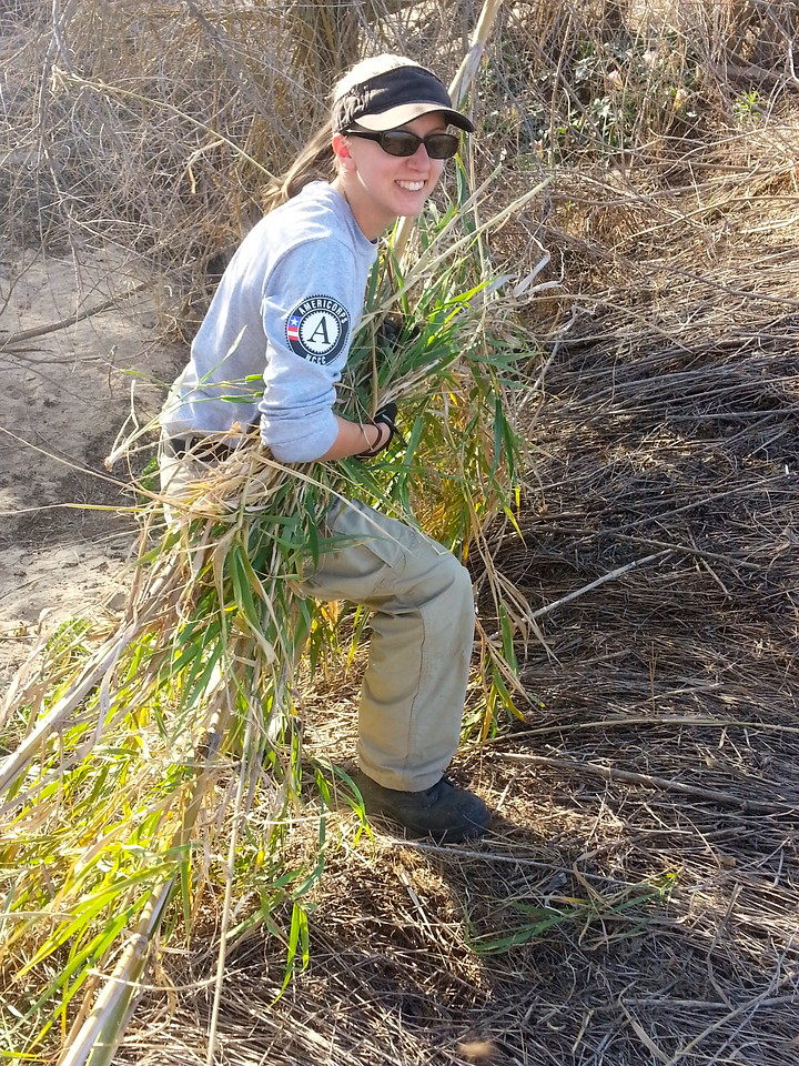 Jen Schollin works hard as she helps remove an invasive cane plant from the banks of a creek running through Alpaugh. AmeriCorps NCCC. Corporation for National and Community Service Photo.
