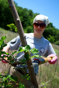 Mia Cornwell clears a tree from the path. AmeriCorps NCCC. Corporation for National and Community Service Photo.