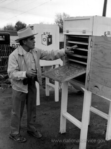 In November 1978, VISTA member Jose Martinez, 65, coordinated the building of the solar greenhouse, which was attached to the office of Colorado Migrant Council in Alamosa. The council sponsored the greenhouse, as well as the solar food driers and collectors. Here, Jose checks bananas that are drying in a solar food dryer. A retired U.S. Postal Service supervisor, Jose is a widower and the father of eight children, all of whom are college graduates. (© 1978 Corporation for National and Community Service- Office of Public Affairs)