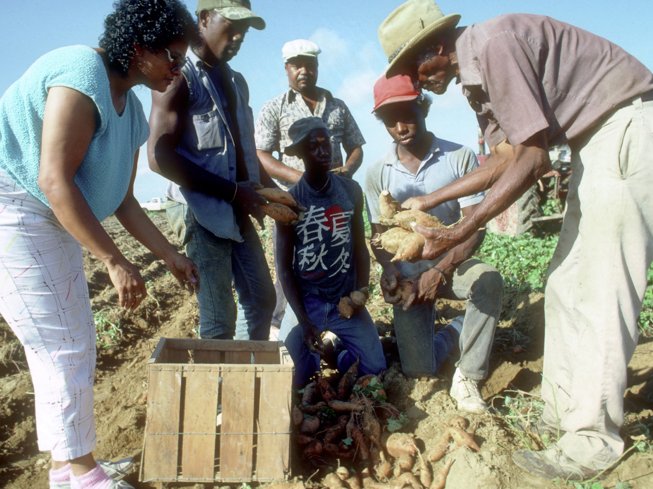 "VISTA alumnus Clessie ""Pop"" Milburn (holding yams) explains the grades of yams to VISTA member Beatrice Edwards and trainees at the Southern Development Foundation Demonstration Farm in Opelousas, Louisiana, in 1986. (© 1986 Corporation for National and Community Service - Office of Public Affairs)"