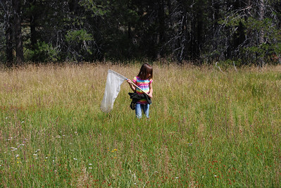 Finding insects in the meadow.