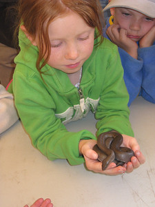 Rubber boa - commonly found in the Sierra Nevada.
