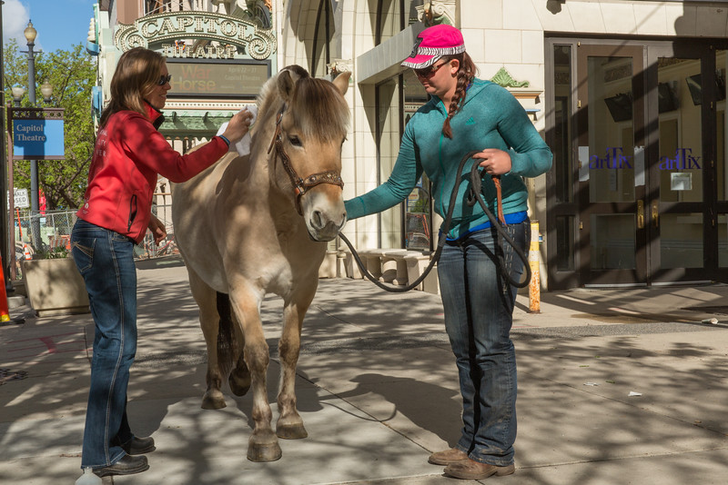 """SALT LAKE CITY, UT - April 23, 2014:  The National Ability Center's therapy horse Rjuka meets Joey, the leading life size puppet horse in the production of """"War Horse"""" playing at the Capitol Theatre.  (Photo by Don Cook)"""