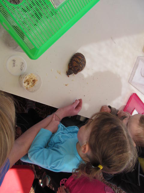 Show and tell Animal Day 2014.